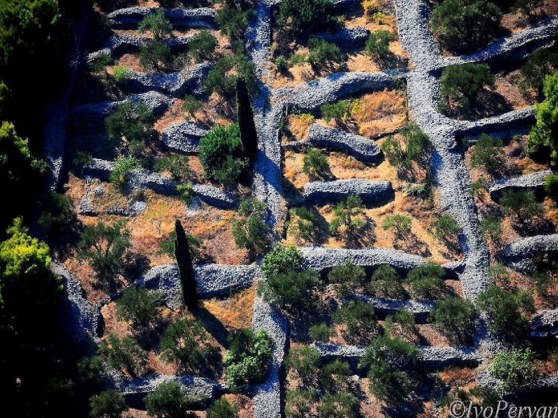 Kameni rukopis dalmatinskih vinogradara (foto: Ivo Pervan)